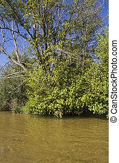river vegetation, alberche riverbank in Toledo, Castilla La Mancha, Spain
