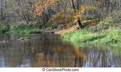 river water flow autumn - forest river water flow closeup...