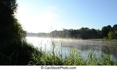 river water flow fog - river shore flora flow and fog rising...