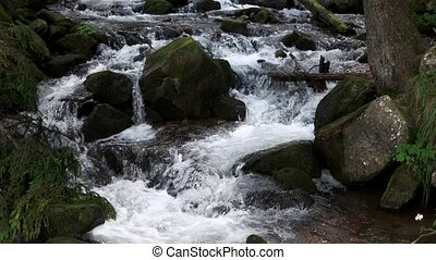 River water stream running among stones. Cold water stream flows among green mossy rocks in the forest.