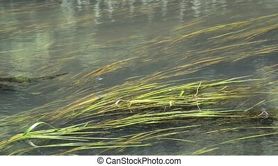 River with algae and dragonflies in summer - River with...