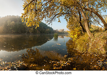River with autumn leaves
