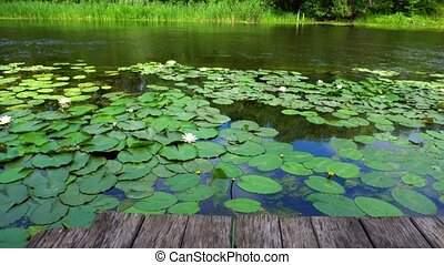 River with lilies and forest with sky behind. Summer calm...