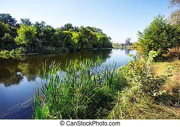 River with reeds and green trees on shore
