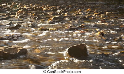 River with rocky bottom closeup