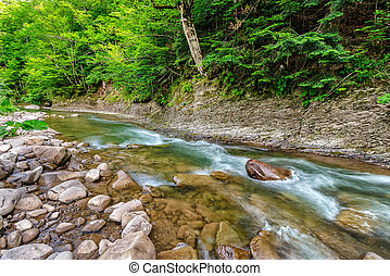 river with stones on shores anmong the forest