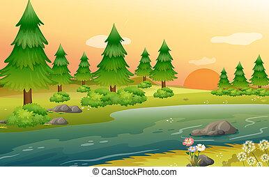 riverbank, arbres, pin