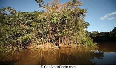 Riverside, Amazon, Peru - Driving At Amazon River