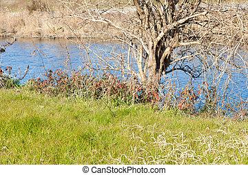 Riverside landscape of early spring