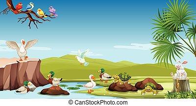 rivière, animaux, beign