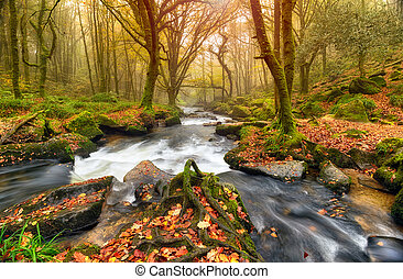 rivière, autum, forêt