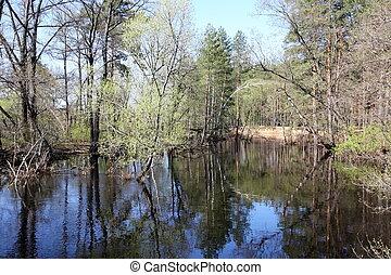 rivière, central, eau, élevé, polya, russie