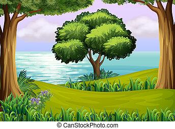 rivière, collines, arbres