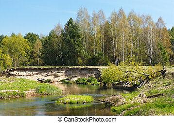 rivière, dans, les, forêt