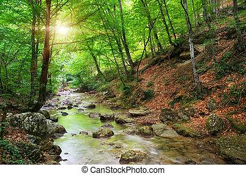 rivière, dans, montagne, forest.