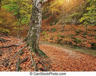 rivière, flow., forêt arbre, automne