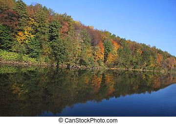 rivière, forêt, banque