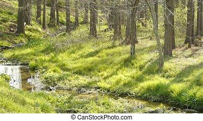 rivière, forêt, mauvaises herbes