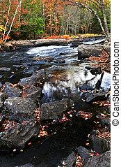 rivière, forêt, paysage, automne