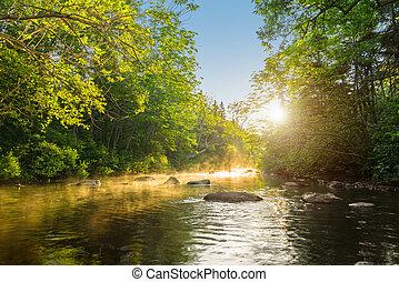 rivière, matin