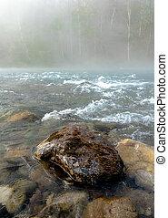 rivière, printemps, sur, brouillard, forêt