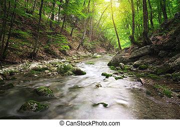 rivière, profond, dans, forest.
