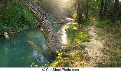 rivière, profond, forest.
