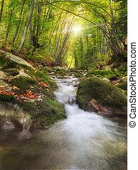 rivière, profond, montagne, forest.