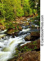 rivière, rapides