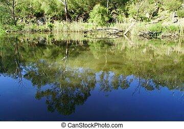 rivière, reflet, de, arbres, et, sky.