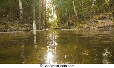 rivière, sur, voler, forêt