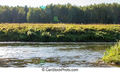 rivière, timelapse, -, forêt, nature