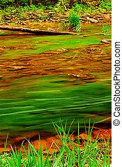 rivier, bos