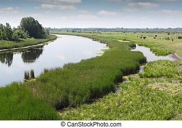 rivier, zomer, landscape