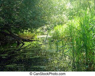 rivieroever, lente