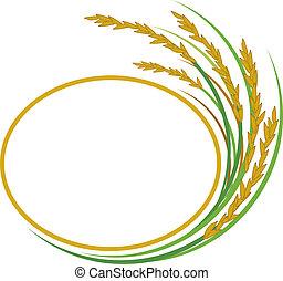 riz, conception