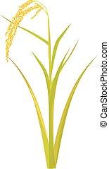 riz, conception, vecteur, plante