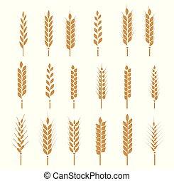 riz, pain, seigle, céréales, icône, symbols., blé, oreilles, maïs, vecteur, avoine, blé, ensemble, illustration, barley.