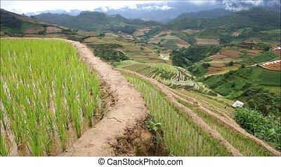 riz, terrasses