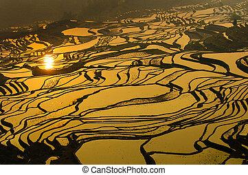 rizs, terasz, közül, yuanyang, yunnan, kína