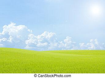 rizs terep, zöld fű, blue ég felhő, táj, háttér