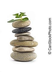 roślina, -, życie, zielony, zrównoważony, kamień wieża