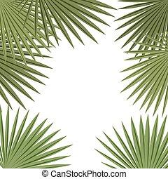 roślina, chorągiew, liście, tropikalny, tło., dłoń, ułożyć, biały, template., karta