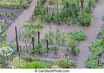 roślina, ciężki, po, ogród, deszcz