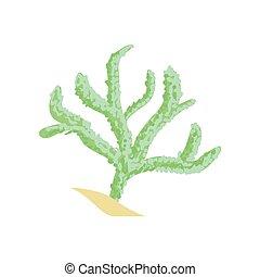 roślina, coral., skóra, wody, bezkręgowy, tropikalny, zielony, akwarium, animal., rysunek, palec