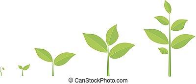 roślina, growing., fazy