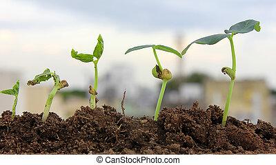 roślina, growth-new, życie