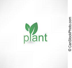 roślina, ikona