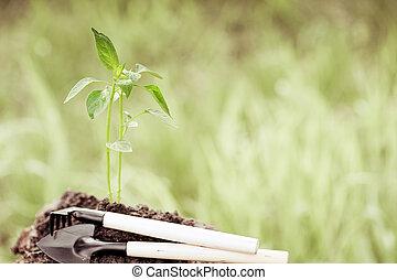 roślina, kasownik, młody, przeciw, zielone tło