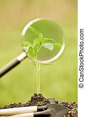 roślina, kasownik, wiosna, młody, przeciw, tło